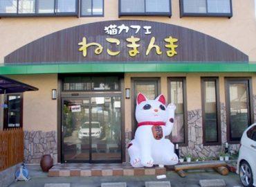 Neko Cafe Neko Manma